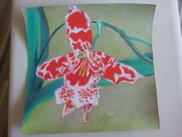 Zeichnungen, Orchidee
