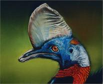Vogel, Rothals, Blau, Kasuare