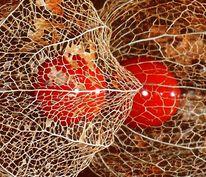 Herbst, Fotografie, Filigran
