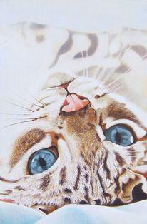 Blaue augen, Tierportrait, Weiß, Katzenportrait