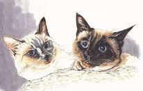 Tier, Katze, Augen, Blau