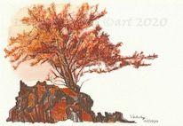 Baum, Naturstudie, Landschaft, Eberesche