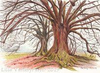 Zeichung, Landschaft, Baumstudie, Studie
