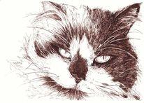 Katze, Langhaarkatze, Federzeichnung, Portrait