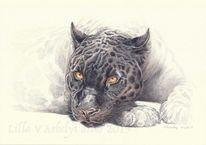 Wildtier, Tuschmalerei, Panther, Tierwelt