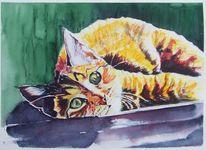 Liegend, Katze, Tierportrait, Aquarellmalerei