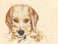 Hund, Hundeportrait, Tierportrait, Federzeichnung