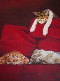 Katzenportrait, Kissen, Rot, Gemütlichkeit