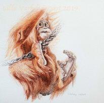 Orangutan, Tierwelt, Wildlifedrawing, Primat