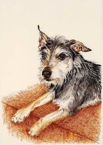 Tierportrait, Tusche, Tiere, Hund