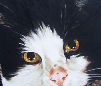 Katze, Tierportrait, Holz, Katzenportrait