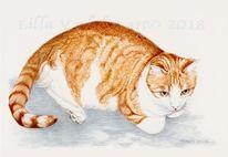 Katze, Rotekatze, Tuschezeichnung, Tiere