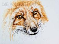 Tuschmalerei, Gesicht, Fuchs, Tierportrait