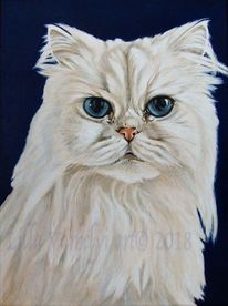 Tierportrait, Katze, Auftragsarbeit, Perserkatze