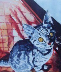 Licht, Aquarellmalerei, Katze, Neugier