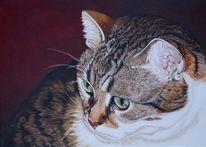 Augen, Katzenportrait, Harzölmalerei, Realismus