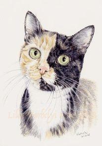 Tuschmalerei, Tiere, Katze, Tuschezeichnung