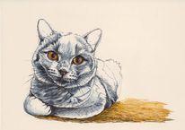 Katze, Tusche, Federzeichnung, Tierportrait