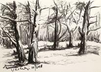 Kohlezeichnung, Zeichnung, Wald, Natur