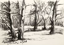 Wald, Natur, Skizze, Baum