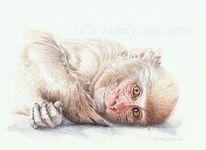 Tierwelt, Zeichnung, Tuschmalerei, Affe
