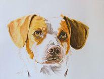 Licht, Hund, Augen, Tierportrait
