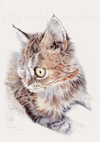 Tierportrait, Langhaar, Tuschezeichnung, Katze