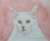 Katze, Tierportrait, Weiß, Maincoon