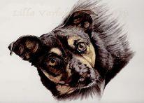 Hund, Tusche, Tiere, Tierportrait