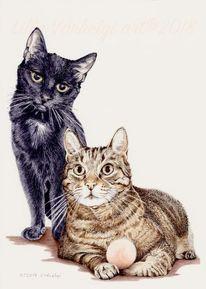 Zeichnung, Katze, Tiere, Tusche