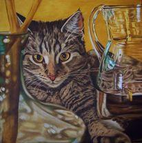 Glas, Katzenportrait, Spiegelung, Karaffe