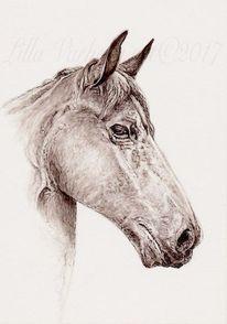 Tuschezeichnung, Tiere, Commissiondraw, Pferde