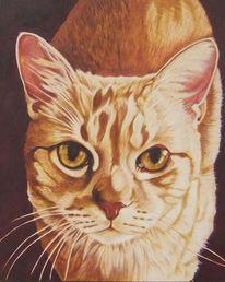 Tiere, Katzenfell, Tierportrait, Harzölmalerei