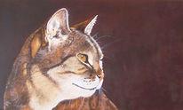Blick, Tierportrait, Sanft, Harzölmalerei