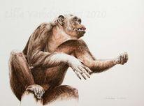 Zeichnung, Primaten, Affe, Wildtier