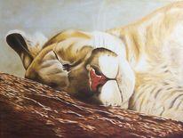 Puma, Tierportrait, Schlaf, Liegend