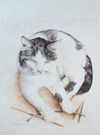 Katze, Tuschmalerei, Tuschezeichnung, Tierzeichnung