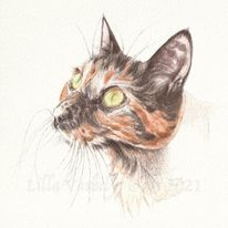 Katze, Tierzeichnung, Tuschmalerei, Tierportrait