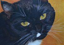 Tierportrait, Auftragsarbeit, Katze, Schwarzekatze