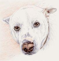 Hund, Zeichnen, Zeichnung, Tierportrait