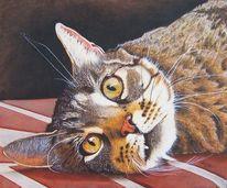 Kachel, Realistischte malerei, Vampirzahn, Katzenportrait