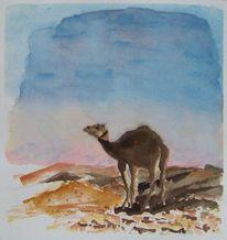 Wüste, Kamel, Aquarell