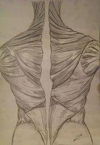 Menschen, Körper, Muskulatur, Zeichnungen