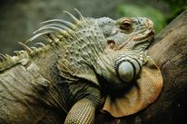 Bedrohlich, Reise, Reptil, Vietnam