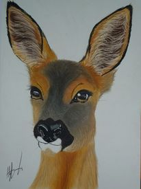 Natur, Pastellmalerei, Augen, Hirsch