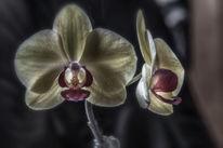 Orchidee, Fotografie, Licht