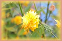 Orange, Blumen, Natur, Grün