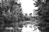 Wasser, Stille, Artenschutz, Naturschutzgebiet
