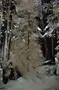 Fotografie, Winter, Schnee, Busch