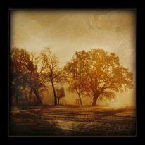 Nebel, Baum, Landschaft, Stimmung